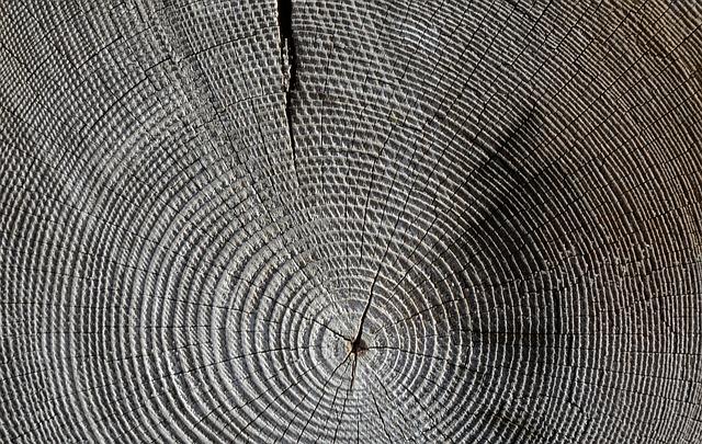 Holzqualitaet